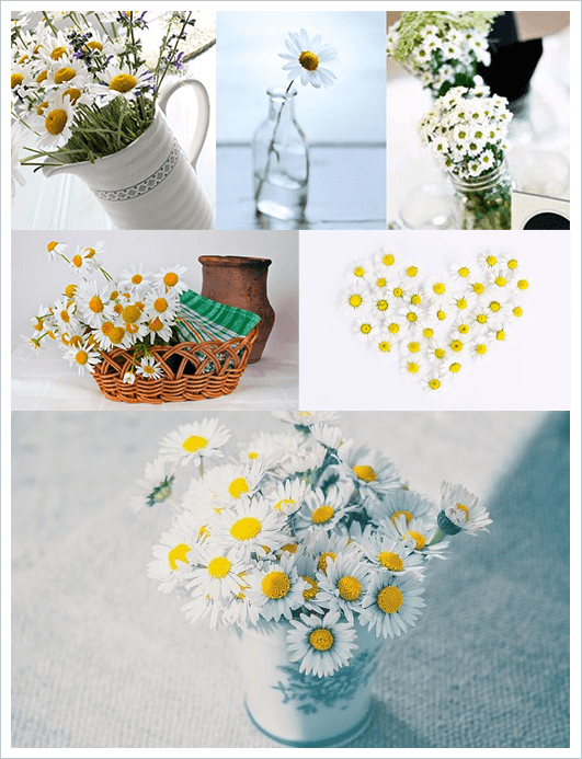 Daisies in different containers