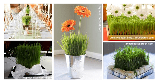 Wheatgrass used as floral arrangements for engagement parties
