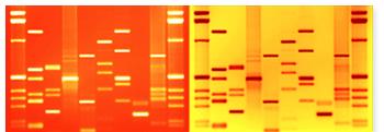 Double DNA Portrait orange and yellow