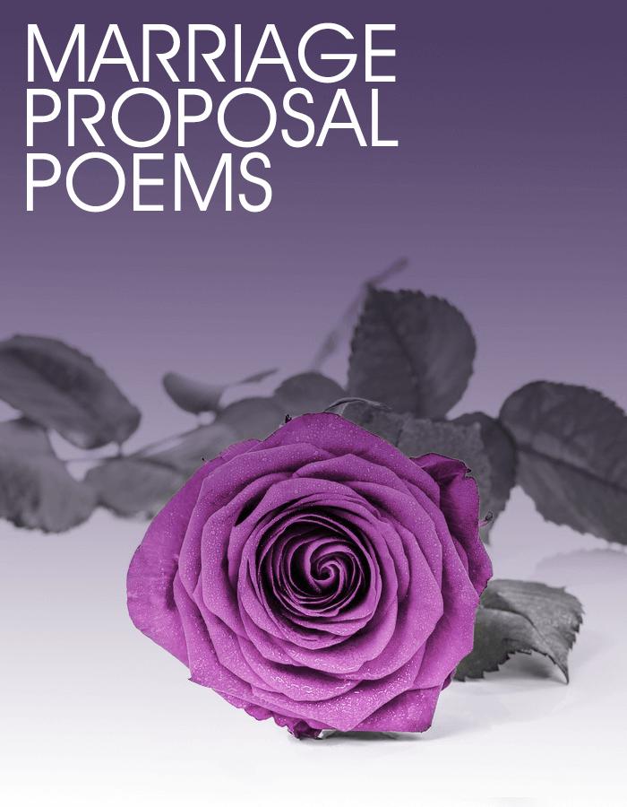 A purple single rose