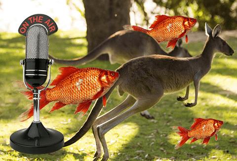 Kangaroos, goldfish and radio microphone